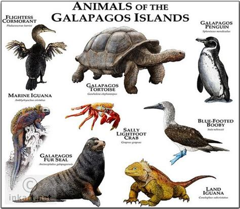 galapagos islands animals galapagos animals go galapagos animals tours travel