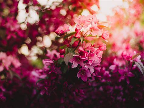 Picture Flowers ภาพเท ๆ วอลเปเปอร ภาพพ นหล ง