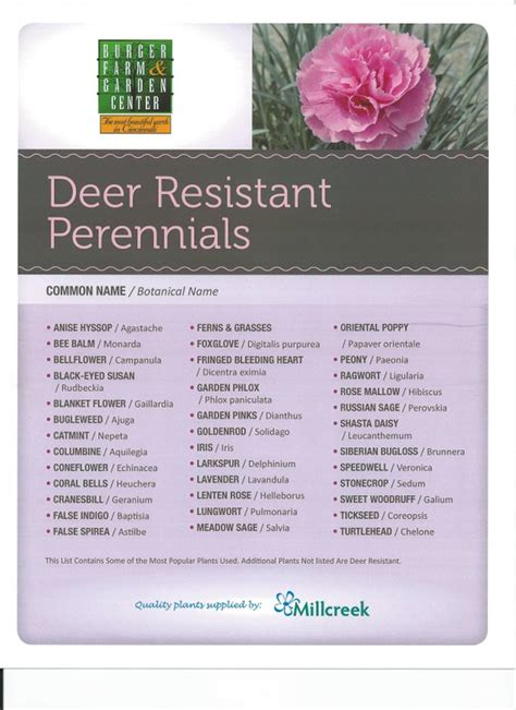 deer resistant plants perennials