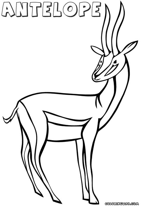 antelope coloring pages coloring pages    print