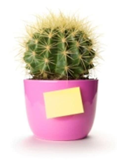 indoor office plants  pictures