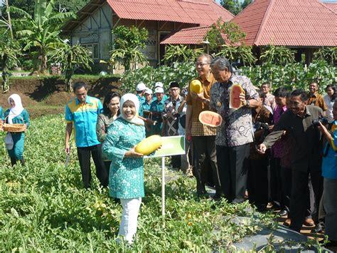 Bibit Semangka Quality festival hotikultura jawa tengah ii tunas agro