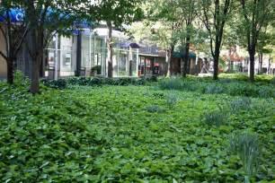 bodenabdeckung garten garden view with ground cover photo hubert steed