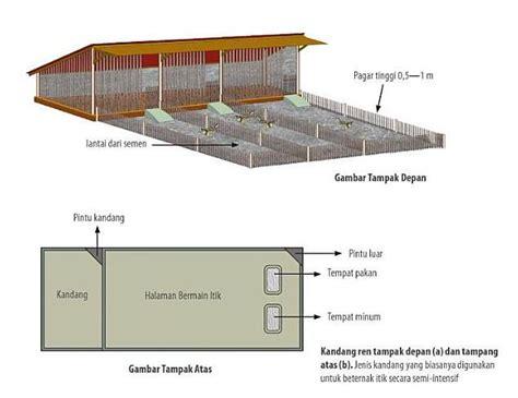 Tempat Makan Ternak Babi kandang 171 ternak itik intensif