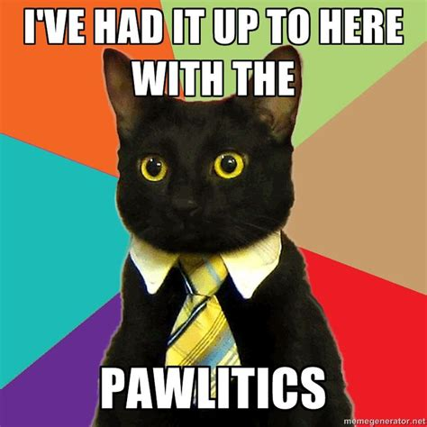 business cat via meme generator work in general