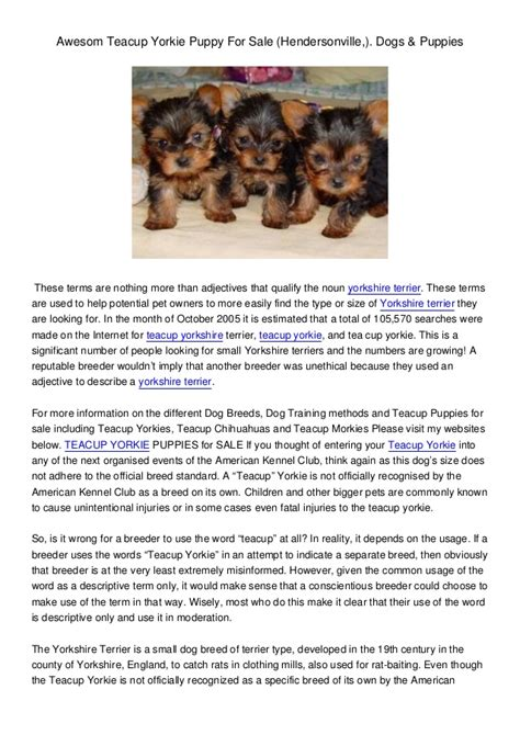facts about yorkie puppies read more about yorkie puppies information