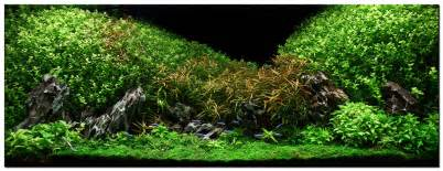 aquascape of the month july 2009 quot oshun quot aquascaping