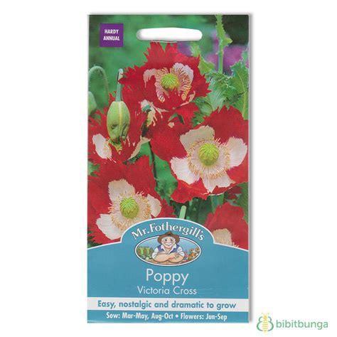 Benih Biji Bibit Bunga Phlox Import Uk Kemasan Repack 1 benih poppy cross 250 biji mr fothergills