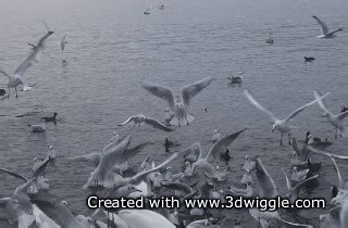 gif standard format how to use 3dwiggle software get detailed instructions