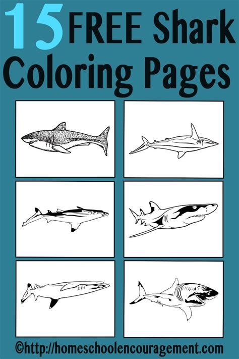 sharks a coloring book books 17 best images about coloring pages printable on