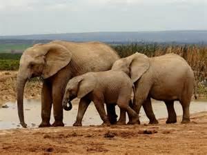 voir des animaux en afrique du sud quelle r 233 serve ou parc
