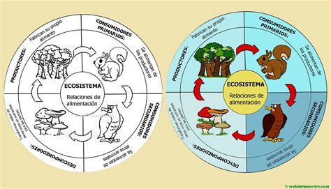 cadenas troficas en ecosistemas ecosistema cadena alimenticia web del maestro