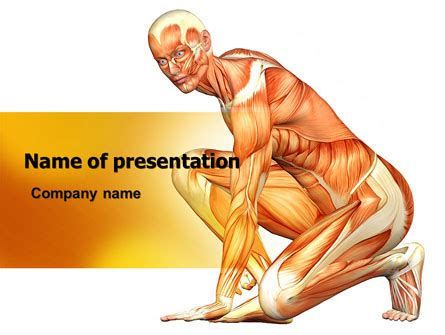 Muscles Of The Human Body Powerpoint Template Backgrounds 06941 Poweredtemplate Com Anatomy Ppt Templates Free