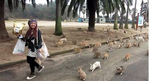 Of The Island Fox A Mystery japan s rabbit island might be cutest place on earth