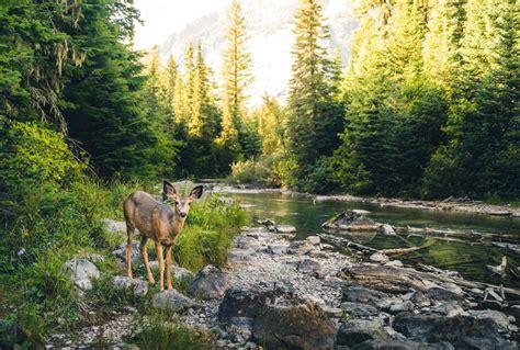 imagenes inspiradoras de la naturaleza 191 qu 233 es un banco de conservaci 243 n de la naturaleza ecoembes