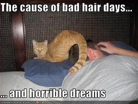 Bad Hair Day Meme - bad hair day frickin hilarious pinterest
