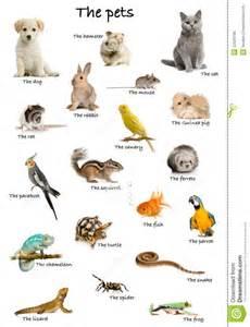 haus tiere hermosas im 225 genes de animales dom 233 sticos en ingles para