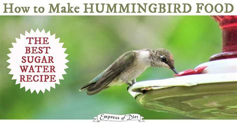 25 b 228 sta hummingbird sugar water id 233 erna p 229 pinterest