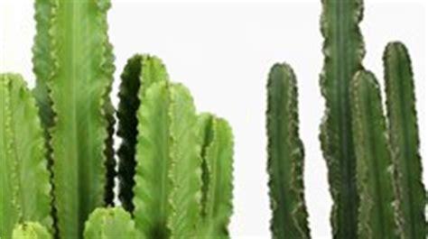 Kaktus Zimmerpflanze by Kaktus Kaufen