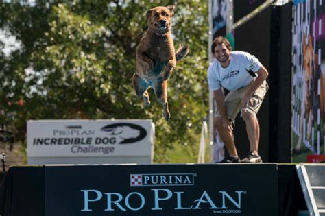 purina pro plan puppy golden retriever purina pro plan challenge golden woofs
