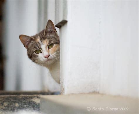 setelan peek a boo cat peek a boo cat getdpi image gallery