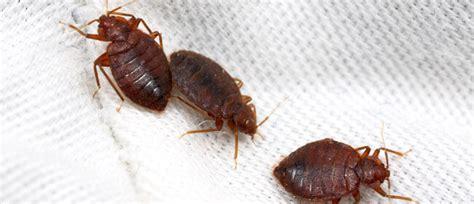 bed bug services مكافحة البق والقضاء عليه