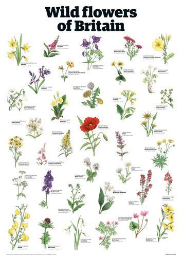 The Guardian Of Flower flowers of britain guardian wallchart prints