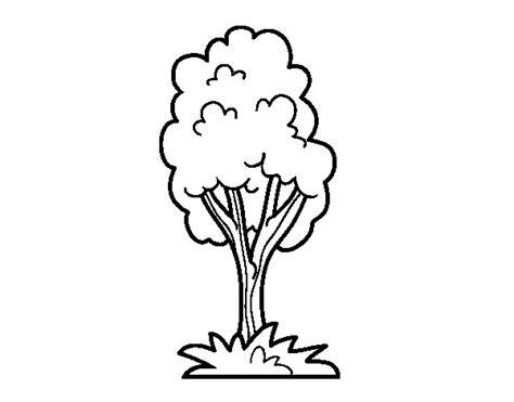 imagenes para dibujar un arbol dibujo de un 225 rbol de parque para colorear dibujos net