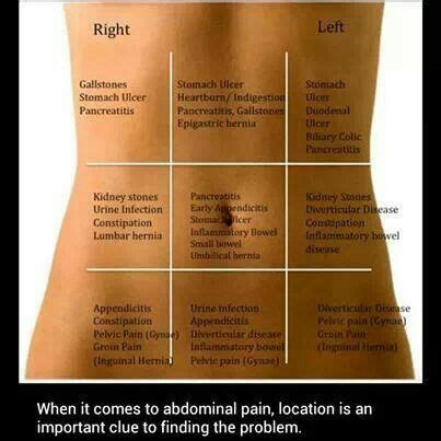 Detox For Stomach Problems by Abdominal Chart Health Info