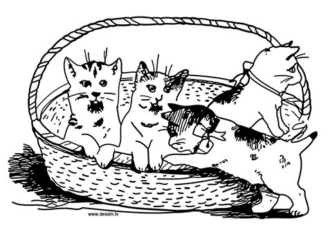 cat family coloring page family cute cat coloring pages coloringsuite com