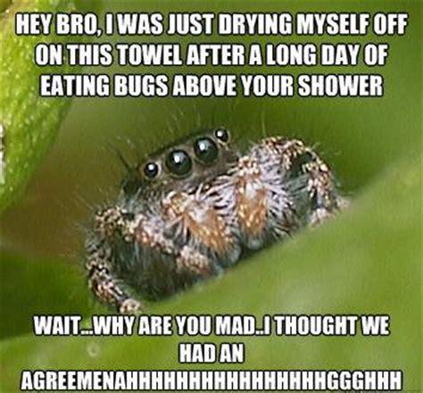 Shower Spider Meme - the sad world of the misunderstood house spider