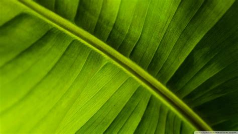 bananas leaf wallpaper download banana leaf wallpaper 1920x1080 wallpoper 441236