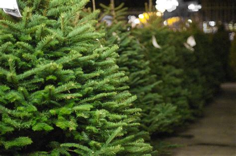 christmas tree recycling program kicks off kpbs
