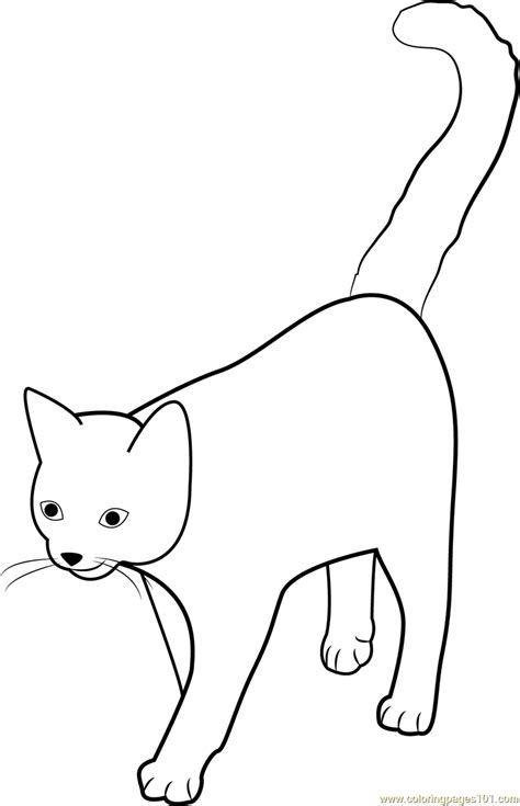 coloring page of cattails printable cattail coloring page sketch coloring page