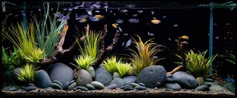 aquarium tips hollywood fish farm