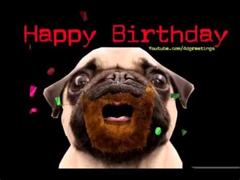 pug singing happy birthday happy birthday pug song