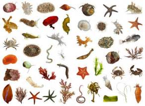 Sea Animals Sea Creatures Sea Animals List