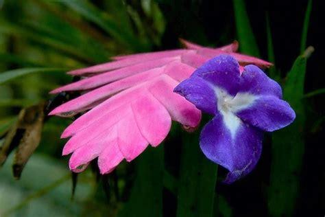piante con fiori piante da appartamento con fiori piante appartamento