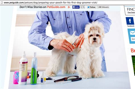 what to expect with a puppy a grooming guide what to expect when taking your pet to a professional