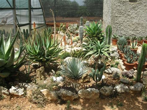 immagini di giardini rocciosi giardini rocciosi forum di giardinaggio it