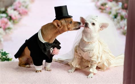 puppy wedding you can get your married this weekend melbourne the list