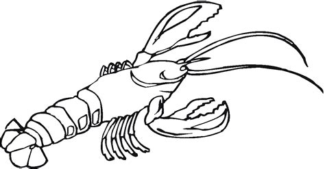 lob star coloring page lobsters new hshire sea grant clipart best