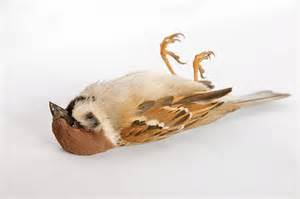 Dead Sparrow Looking For The Living Among The Dead God Running