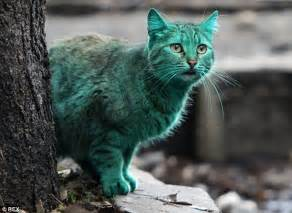 Green Cat emerald cat in varna bulgaria given a wash by animal