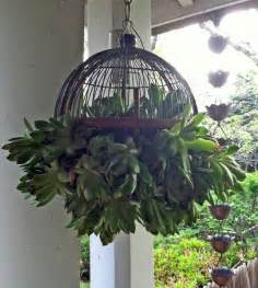 hanging plants as indoor decoration room decorating