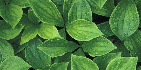 foliage of plants virtudes de las plantas para descontaminar ambientes s