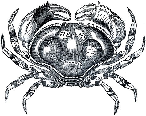 public domain crab image  graphics fairy