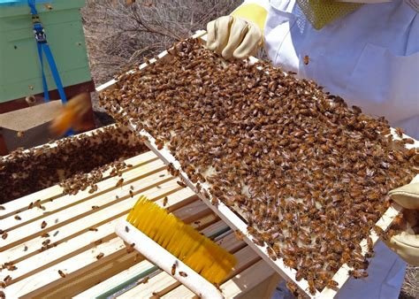 how to get rid of a swarm of bees who you gonna call to get rid of that bee swarm south
