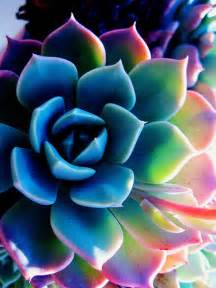 colorful cactus midnight in colorful succulent