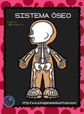 Imagenes Educativas Cuerpo Humano | el cuerpo humano aparatos y sistemas para primaria